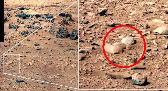 Mars rat