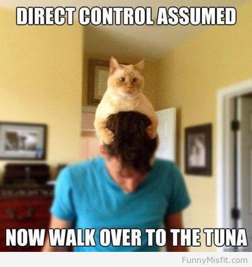 Science Fiction Jokes, Part 4 \u2013 Special Feline Edition