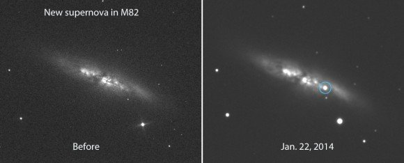 The supernova in the Cigar Galaxy