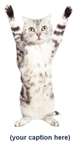 Cat hands up