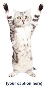 Cat hands up