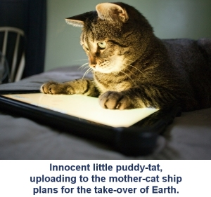 Cat-tablet
