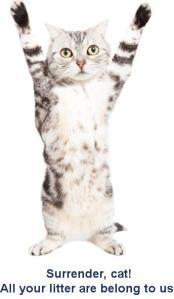 Cat hands up 2