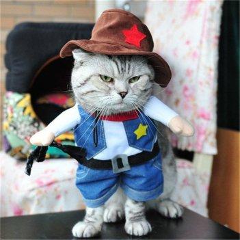 clothed cat 2