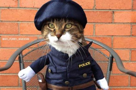 clothed cat 3